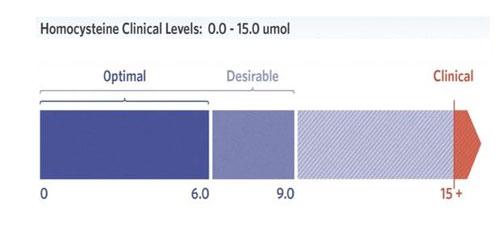 vitamin b12 range levels
